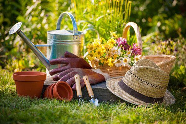 Лунный календарь на 2021 года садовода и огородника, цветовода