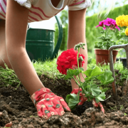 Лунный календарь огородника садовода на май 2021 года