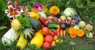 Лунный календарь огородника садовода на июнь 2021 года