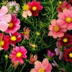 Лунный календарь огородника садовода на апрель 2020 года