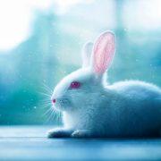 Гороскоп Кролик июнь 2021